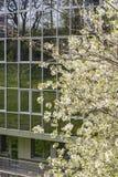 De lente binnen de stad in Royalty-vrije Stock Afbeeldingen