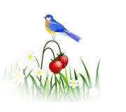De lente blauwe vogel royalty-vrije illustratie