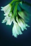 De lente in Bloei Royalty-vrije Stock Foto's