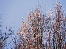 De lente in bloei Royalty-vrije Stock Afbeeldingen