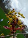 De lente is in Bloei royalty-vrije stock foto