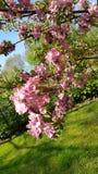 De lente bloeiende boom stock fotografie
