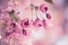 De lente: Bloeiende boom met roze bloesems, schoonheid stock fotografie