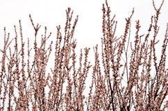 De lente Bloeiende fruitbomen in de lente stock afbeelding