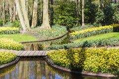 De lente in bloeiende groene tuin Keukenhof, Nederland royalty-vrije stock foto's