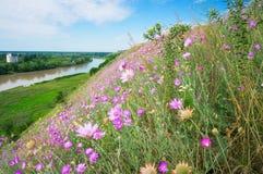 De lente bloeit 7 Royalty-vrije Stock Foto's
