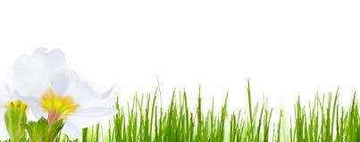 De lente bloeit achtergrond Royalty-vrije Stock Foto