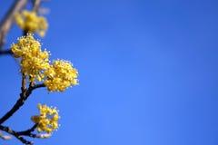 De lente bloeit achtergrond Royalty-vrije Stock Foto's