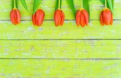 De lente bloeit achtergrond, mooie tulpen op groen hout met ruimte voor tekst stock afbeeldingen