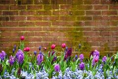De lente bloeit Bakstenen muurachtergrond stock fotografie