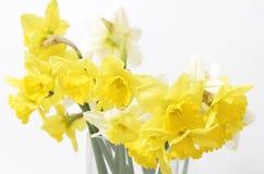 De lente bloeit boeket Royalty-vrije Stock Foto's