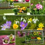 De lente bloeit collage royalty-vrije stock foto's
