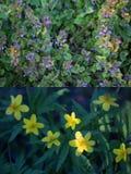 De lente bloeit collage Stock Afbeelding