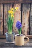 De lente bloeit gele narcissen en blauwe hyacint op de houten achtergrond Pasen en Maart 8 prentbriefkaarconcept Stock Afbeelding