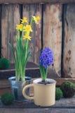 De lente bloeit gele narcissen en blauwe hyacint op de houten achtergrond Pasen en Maart 8 prentbriefkaarconcept Royalty-vrije Stock Fotografie