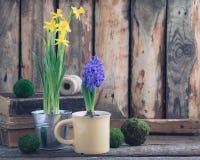 De lente bloeit gele narcissen en blauwe hyacint op de houten achtergrond Pasen en Maart 8 prentbriefkaarconcept Royalty-vrije Stock Foto's