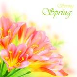 De lente bloeit grens