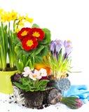 De lente bloeit hyacint, narcissen en primula Stock Foto
