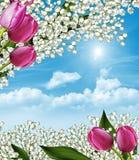 De lente bloeit lelies Stock Afbeeldingen