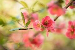 De lente bloeit macromening Ondiepe diepe nadruk royalty-vrije stock foto's