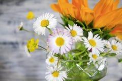 De lente bloeit margrieten stock foto