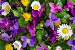 De lente bloeit patroon Stock Fotografie