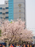 De lente bloeit reeks, Cherry Blossoms Stock Fotografie