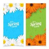De lente bloeit samenstelling Stock Fotografie