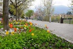 De lente bloeit stad Stock Afbeeldingen