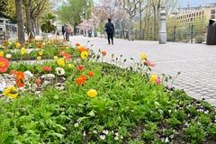 De lente bloeit stad Royalty-vrije Stock Foto's