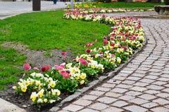 De lente bloeit stad Royalty-vrije Stock Foto