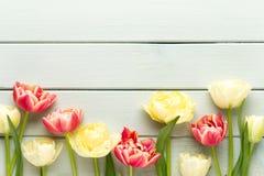 De lente bloeit tulpen op pastelkleurenachtergrond Retro uitstekende illustratie style royalty-vrije stock foto
