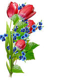 De lente bloeit tulpen op witte achtergrond worden geïsoleerd die Royalty-vrije Stock Foto's