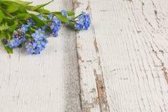De lente bloeit vergeet-mij-nietje stock afbeelding
