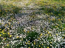 De lente, bloem Royalty-vrije Stock Foto