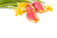 de lente bloem Stock Afbeelding