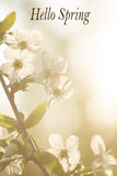 De lente, bloemen, bloei, bloemblaadjes, fruitbomen, aard, gloed Stock Fotografie
