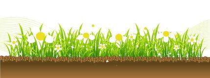 De lente, bloemen op de weide Stock Foto