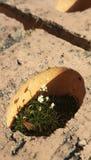 De lente, bloemen Privé tuin in een kleine wereld foto niemand Stock Afbeelding