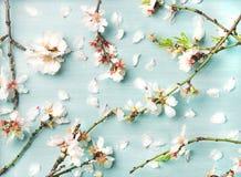 De lente bloemenachtergrond met witte amandelbloemen en bloemblaadjes royalty-vrije stock fotografie