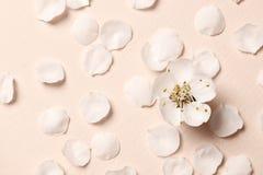 De lente bloemenachtergrond, textuur en behang Vlak-leg van de de witte bloemen en bloemblaadjes van de amandelbloesem over roze  royalty-vrije stock foto