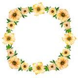 De lente bloemenillustratie Mooie gele bloemen met groene bladeren die kader maken Rond patroon op witte achtergrond Stock Foto's