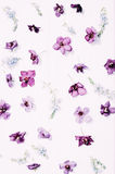De lente bloemenpatroon Stock Foto's