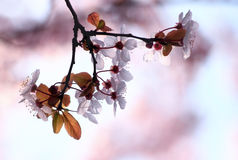 De lente bloemenpracht Stock Foto