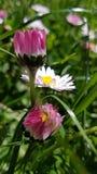De lente bloemenstemming Stock Afbeeldingen