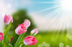 De lente bokeh achtergrond van de bloem en van de aard Royalty-vrije Stock Foto's