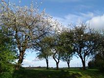 de lente bomen royalty-vrije stock fotografie