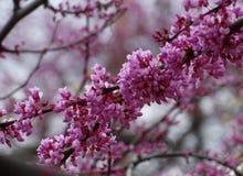 In de lente is de boom behandeld met bloemen Stock Foto