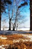 De lente bos en blauwe hemel stock fotografie