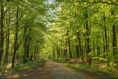 De lente bosweg Stock Afbeelding